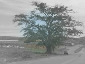foto: fabiana fonsaca